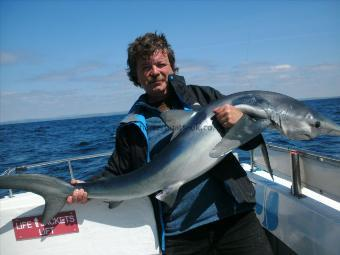 80 lb Blue Shark by Unknown